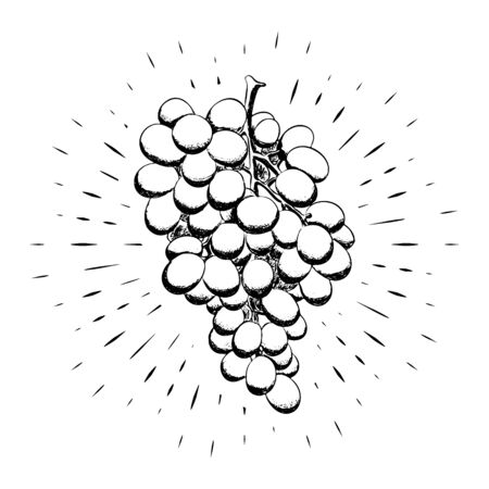 Bunch of grapes drawn by hand, black outline on the background of linear rays. Calligraphy. For design of posters, banners, logos. White background. 10 eps