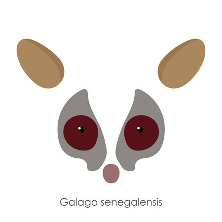 Abstract senegal bushbaby, Galago senegalensis, head of an animal. Flat style. Vector image. On a white background