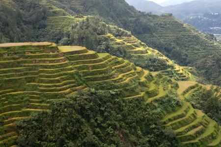 Rice terraces trail.