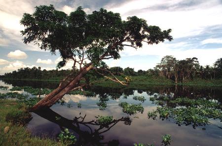 Landscape in the Orinocos Delta.