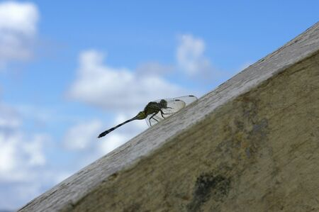 Dragon-fly in Mountains Chocolate Hills. Bohol. The Visayas. Philippines. The Chocolate Hills are a geological formation in Bohol Province, Philippines. There are at least 1,260 hills but there may be as many as 1,776 hills spread over an area of more tha Imagens - 39421194