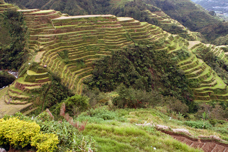 southeastern asia: Rice terraces trail.