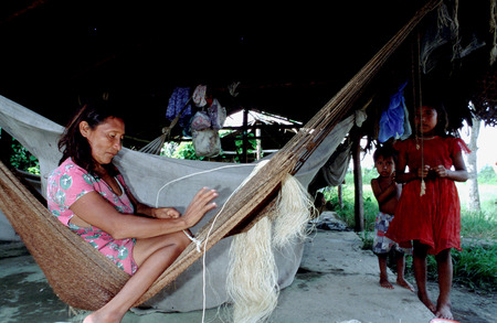 translates: Woman doing a hammock in the Orinoco River. The Warao are an indigenous people inhabiting northeastern Venezuela and western Guyana. Alternate common spellings of Warao are Waroa, Guarauno, Guarao, and Warrau. The term Warao translates as the boat people Editorial