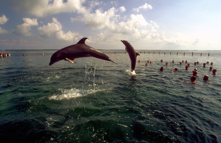 atraction: Swimming with dolphins in Rancho Cangrejo, Varadero, Cuba. Rancho Cangrejo (that is the delfinario that is included in the Crucero del Sol) is in the sea, you can get there only by boat. A specialized excursion is available at Gaviota Tours that includes