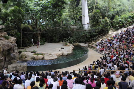 Sea lion Show Singapore zoo Singapore Editorial