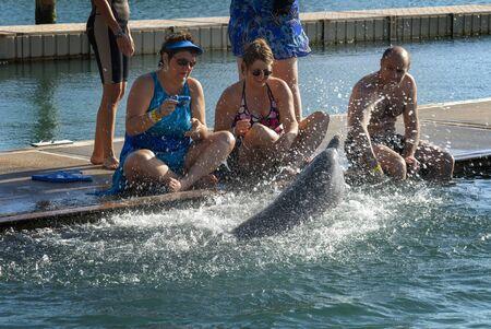 Sanctuary Bay, Grand Bahama. Bahamas. UNEXSO. Program Swim and close encounter with the dolphins.