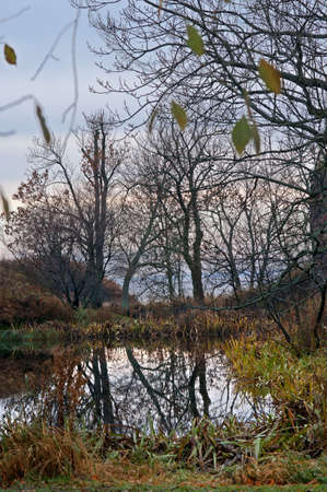 Forest in the island of Suomenlinna Sveaborg, Helsinki, Finland. Editorial