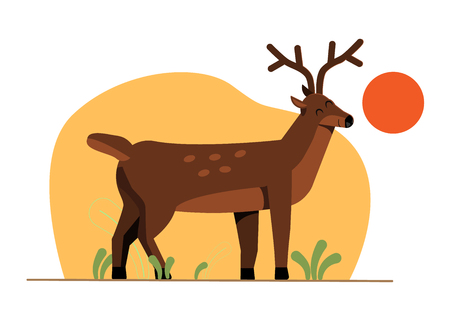 Illustrations of the spotted Deer Illustration