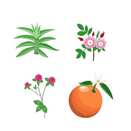 Set medical herbs. Dog rose, clover, juniper, aloe vera, olive branch, bitter orange and holy basil. Colored plants isolated on white background. Alternative medicine series. Vector. Vintage engraving Illusztráció