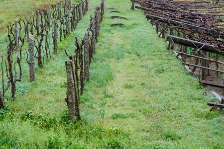 image of empty vineyards in rainy weather