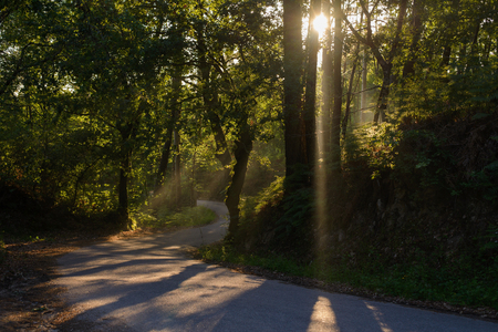 view of rays of the sun shining through the foliage of trees on the road in the forest
