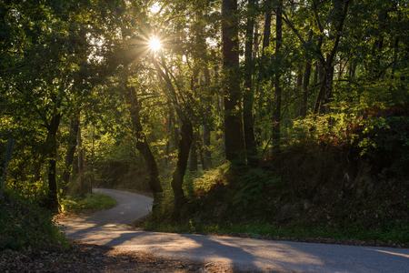 view of rays of the sun shining through the foliage of trees on the road in the forest Reklamní fotografie