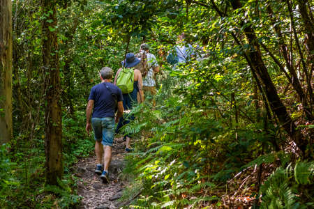 rear view of a group of tourists walking along a path in a green forest, hiking