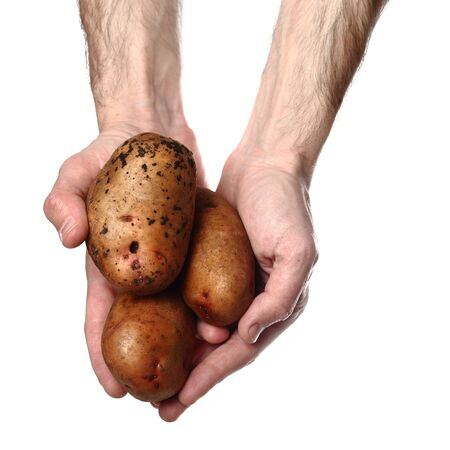 russet: Man`s hands holding potatoes isolated on white background