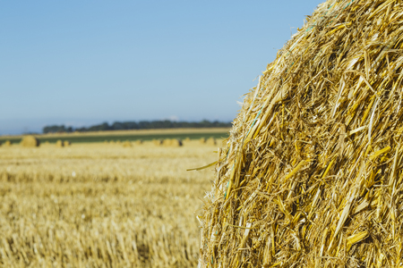Yellow wheat field with straw bales after harvesting on a sunny day in Normandy, France. Country landscape, agricultural fields in summer. Environment friendly farming, industrial agriculture concept Stock Photo