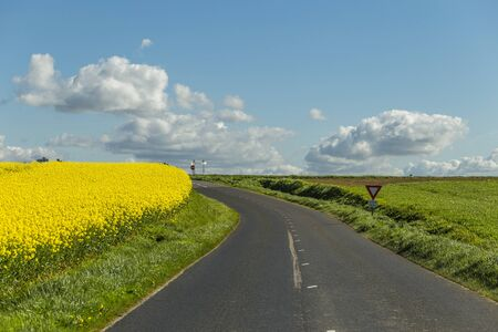 Empty country asphalt road passing through green and flowering agricultural fields. Countryside landscape on a sunny spring day in Normandy, France