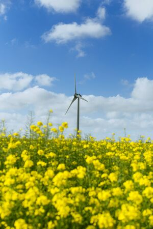 Windmills for electric power behind flowering rapeseed field in France. Agricultural landscape on a sunny day. Environment friendly electricity production, renewable energy concept