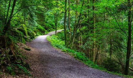 Path in the Black wood in Triberg, Baden Germany