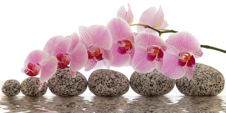 water stone: Orchid with water reflection Stock Photo