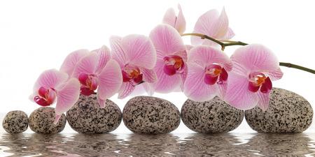orchidee: Orchidea con la riflessione dell'acqua Archivio Fotografico