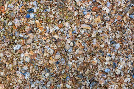 alluvial: Shells on the beach Stock Photo