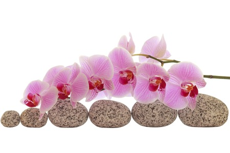 Spa composition of stones with orchid isolated on white Stock Photo
