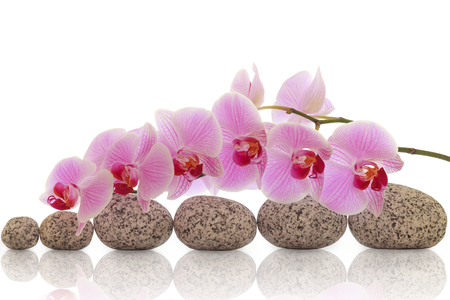 Spa composition of stones with orchid
