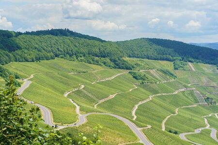 The vineyards on the Moselle river, Rhineland-Palatinate, Germany