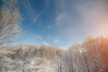 Snow-covered Carpathian Mountains in winter, winter forest
