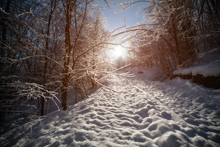 Snow-covered road in the Carpathian mountains in the forest, in front of the bright sun. 免版税图像
