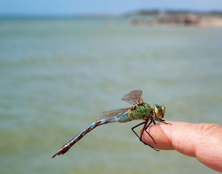 dragonfly sitting on hand at the seaside 写真素材 - 132071323