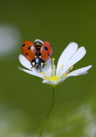 Ladybir photo