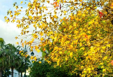Yellow leaves on a background of green trees and a street lamp in a park alley Stockfoto - 128618078