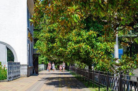 Sochi, Russia - July 20, 2019: Resort Avenue. People walk on a pedestrian street under green magnolias Редакционное