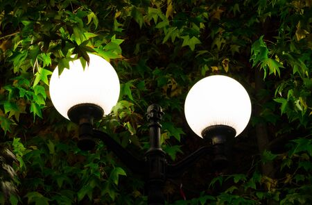Street lamp on a background of green foliage in the park. Two brightly shining round shades, close-up. City improvement