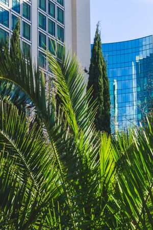 Part of the facade of a high-rise building with green glazing. In the foreground are palm branches and green cypress. Green city concept. Vertical frame