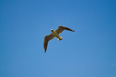 A seagull in flight against a blue sky looks down into the frame. Top lighting