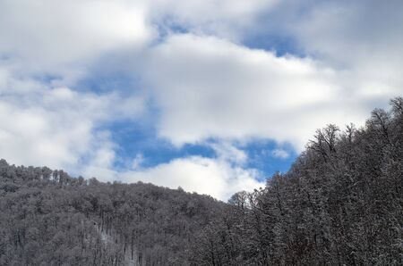 Mountain forest without snow. Blue sky with thick white clouds