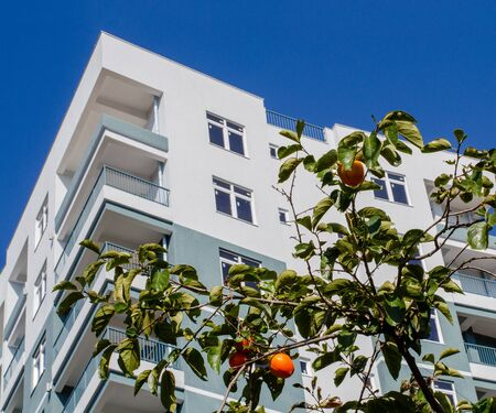 Ripe large persimmons on the background of the facade of a residential building. Orange fruits. Harvest in the orchard in the city. The concept of rapprochement of the village and the city