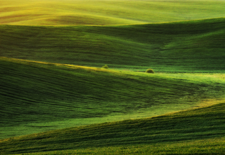 spring field. picturesque hilly field. agricultural field in spring Stock Photo