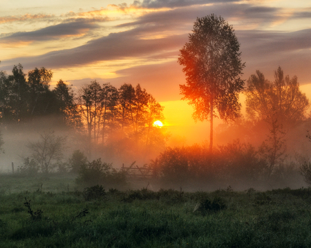 spring morning. a misty dawn in a picturesque meadow. Sun rays