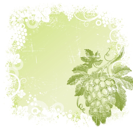 ripened: Grunge vector background with hand drawn bunch of grapes