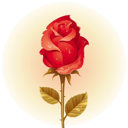 thorns and roses: Vector Red rose with dew