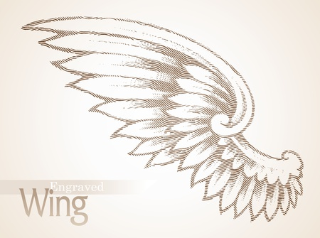 Vector engraved ornate wing Vector