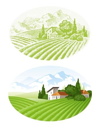 agrario: Hand drawn vector paisaje con campos agrarios, pueblo y mounains