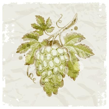 Grunge hand getekend tros druiven op vintage papier achtergrond - vector illustratie