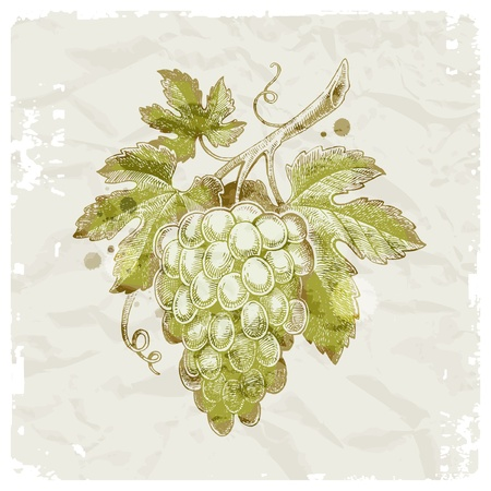 raisin: Main grunge dessin� une grappe de raisin sur fond de papier vintage - illustration vectorielle Illustration