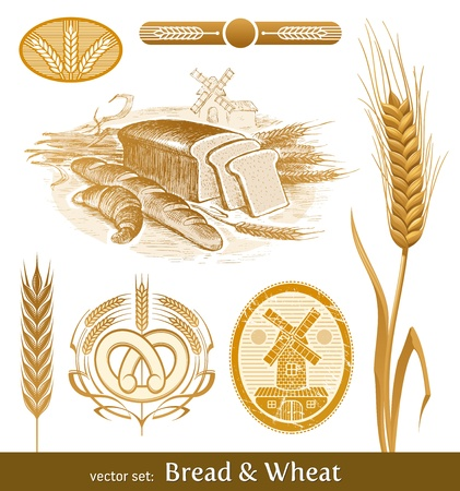 fresh bakery: Vector set - bread and wheat