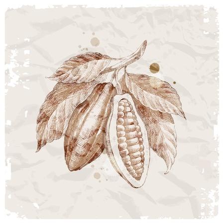 Grunge vector illustration - hand drawn cocoa beans on branch Vektoros illusztráció