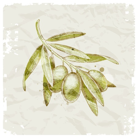 antioxidant: Grunge vector illustration - hand drawn olive branch